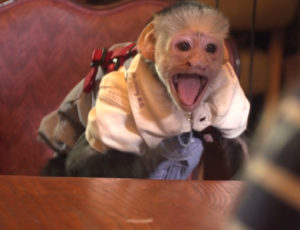 MONKEY ON SET!